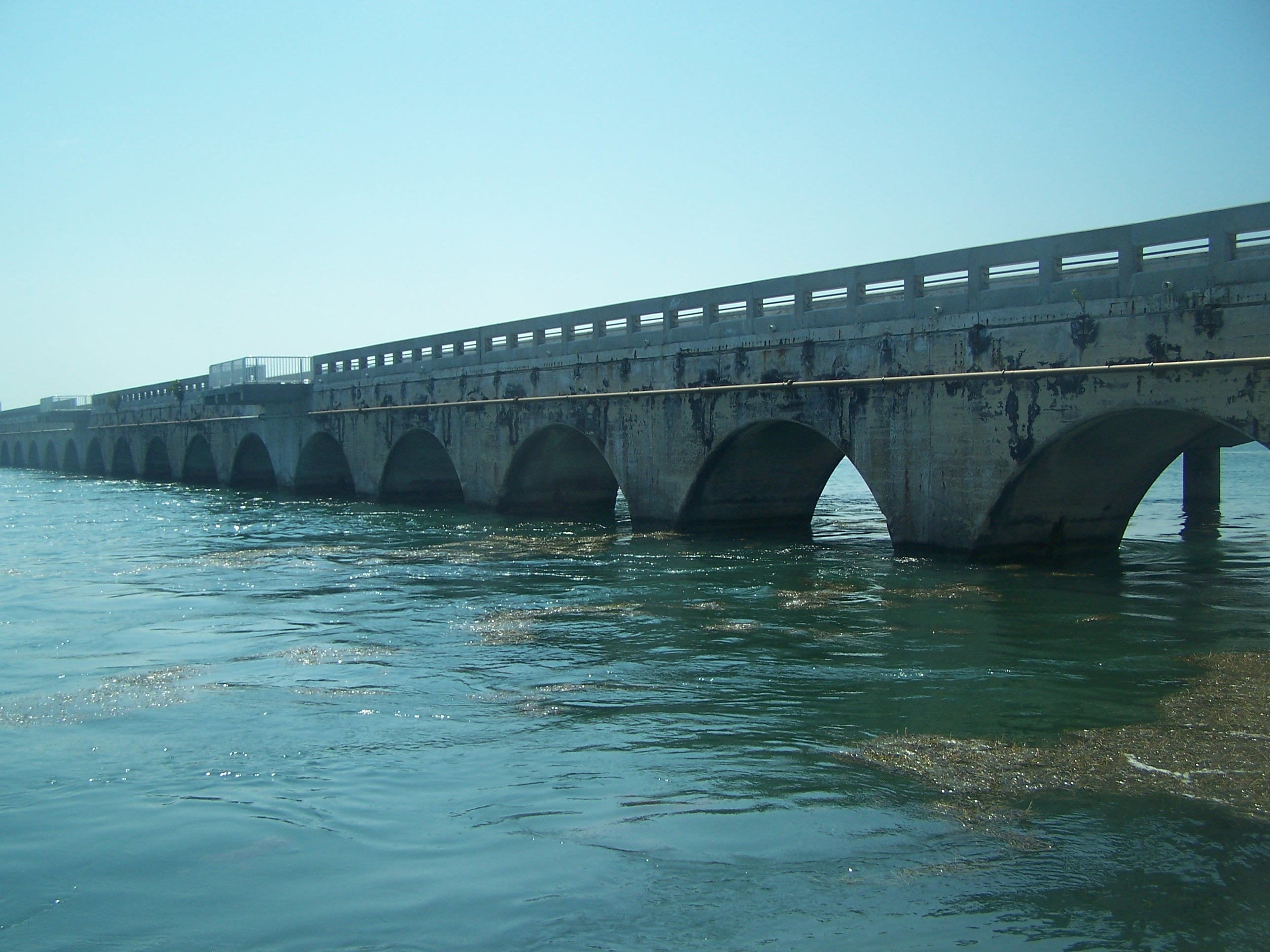 Bridge fishing in the florida keys shorebound adventures 1003062 nvjuhfo Image collections