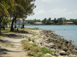 The shore at Haulover Park next to the Marina