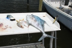African Pompano on Right Hook Charter
