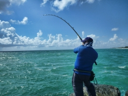 Fighting a snook at Jupiter Inlet Jetty