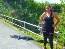 Shark Valley next to an alligator