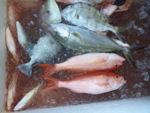Fish Box Sealegs III 1-19-14