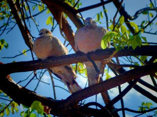 Lobe Birds