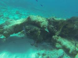 Oasis Reef Grand Turk