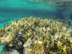 reef in Cozumel Mexico