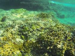 snorkeling in Cozumel