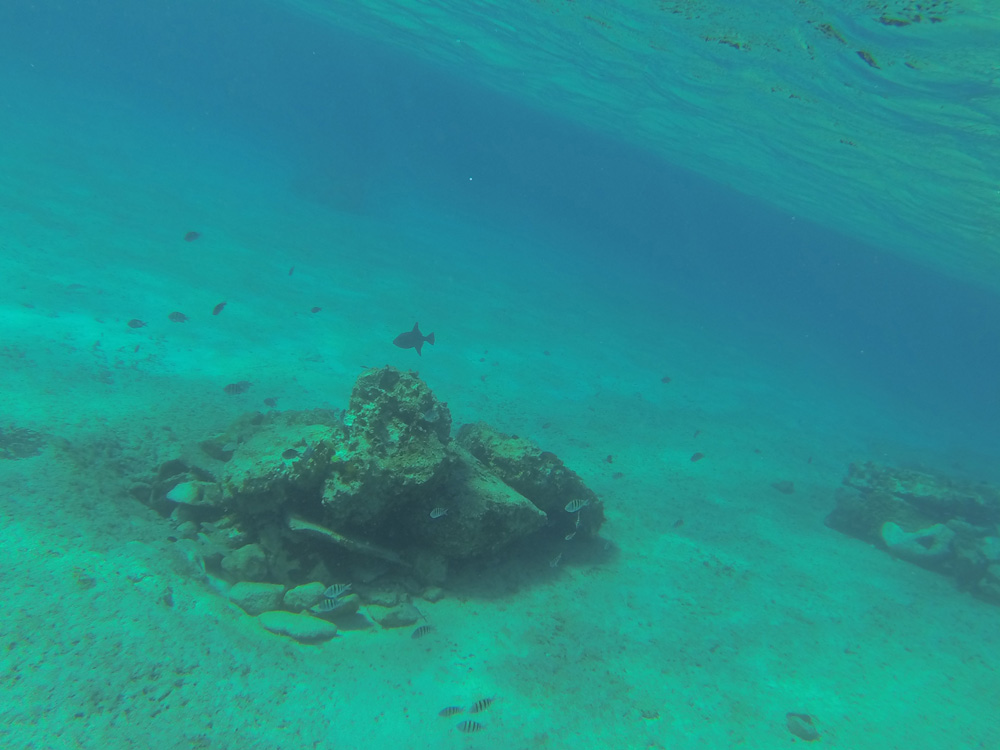 Cozumel Snorkeling Adventure February 15th 2014