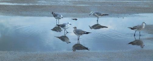 Haulover marina seagulls