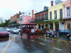 Mule in New Orleans