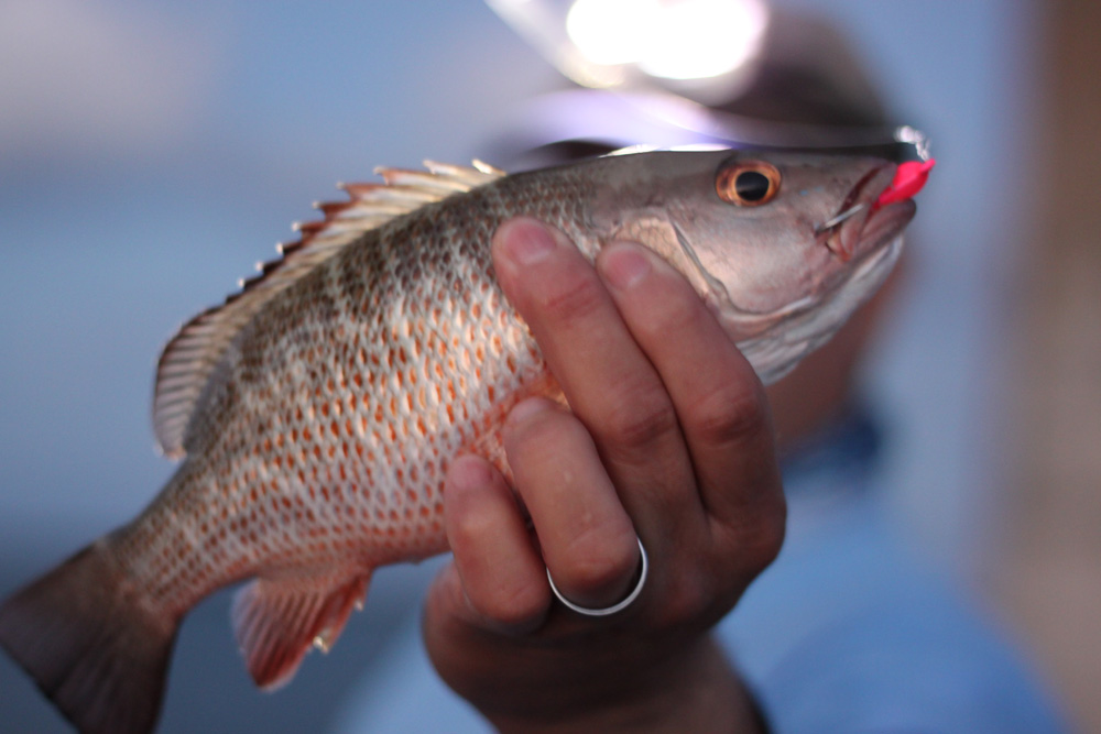 Fish Tanks Direct  Buy Freshwater and Saltwater Aquariums
