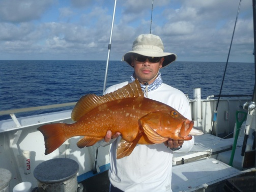 An red grouper