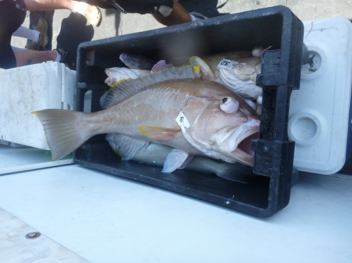 Crate with fish and 24 lb on top