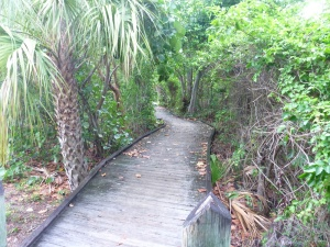 A WALKING TRAIL TO OTHER AREAS IN THE PARKA walking trail to other areas in the park