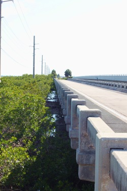 Florida Keys Bridges 101