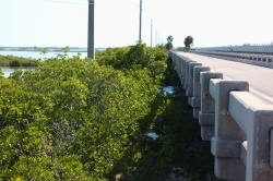 Florida Keys Bridges 109