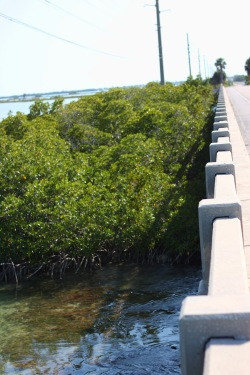 Florida Keys Bridges 112