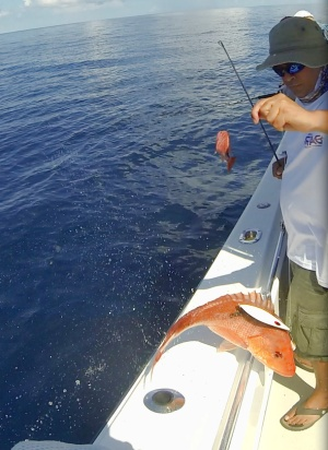 Ray with American Red Snapper
