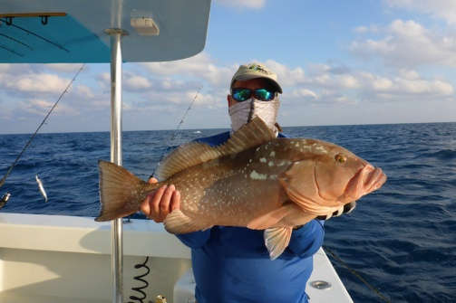 Herbert's Red Grouper 2