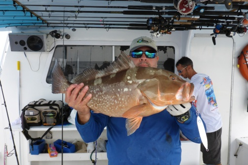 Herbert's Red Grouper 3