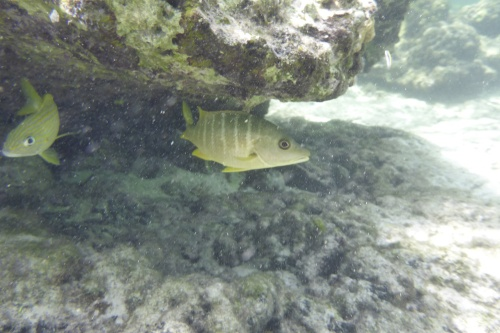 Cayman Islands007