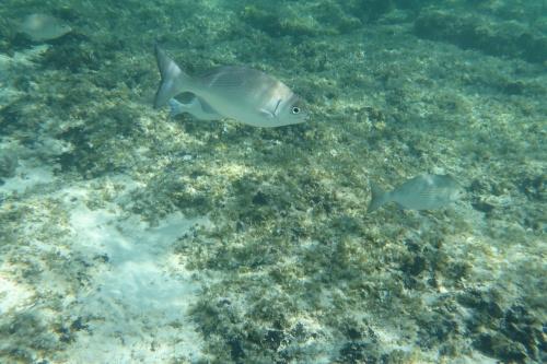 Cayman Islands008