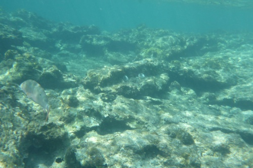 Cayman Islands010
