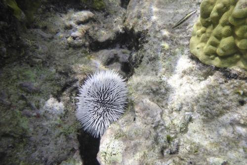 Cayman Islands012