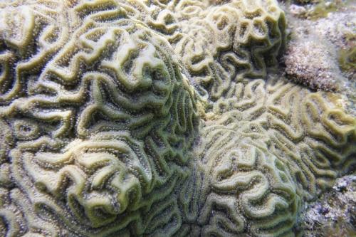 Cayman Islands013