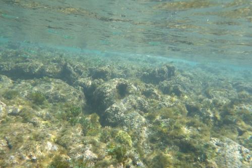 Cayman Islands019