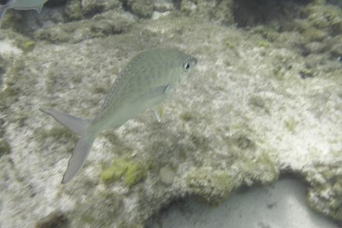 Cayman Islands020
