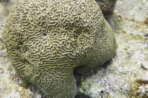 Cayman Islands021