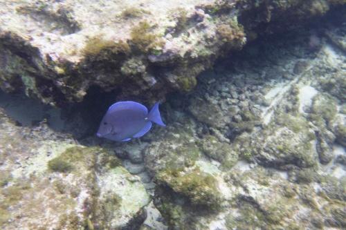 Cayman Islands024