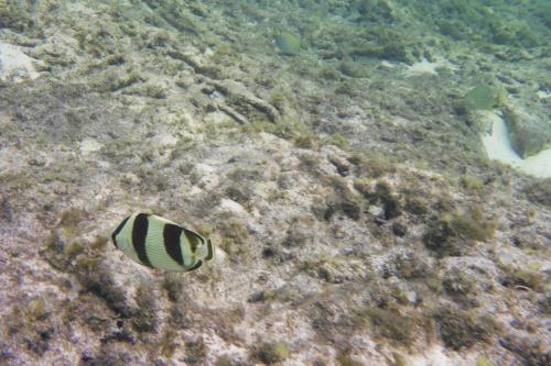 Cayman Islands028