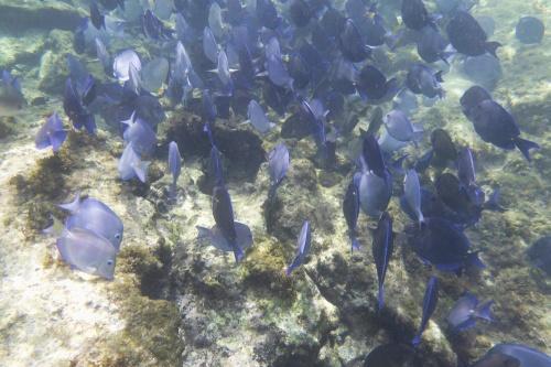 Cayman Islands030