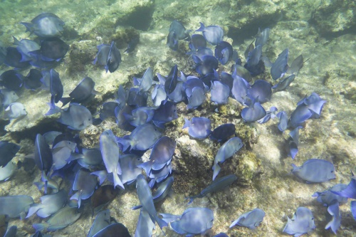 Cayman Islands034