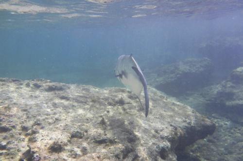 Cayman Islands036