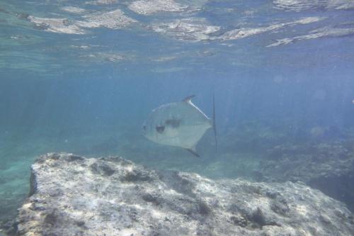 Cayman Islands037