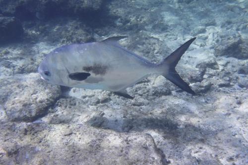 Cayman Islands039