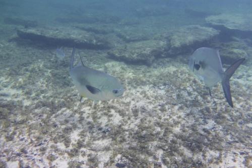 Cayman Islands041