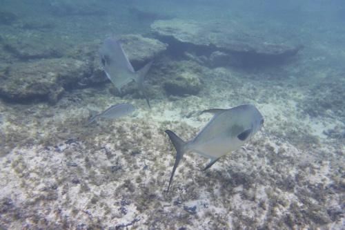 Cayman Islands042