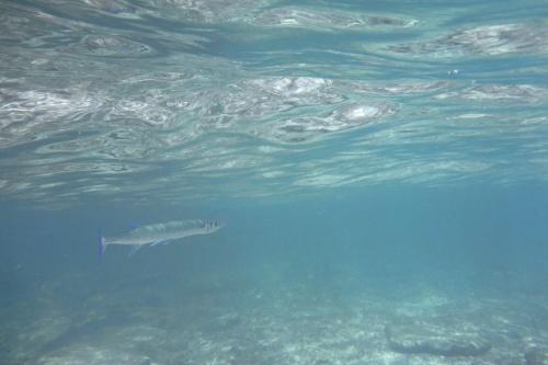 Cayman Islands043