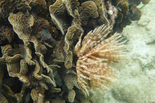 Honduras Coral small-2