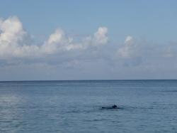 Isla Roatan Reef & Island002