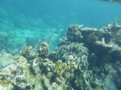 Isla Roatan Reef & Island007