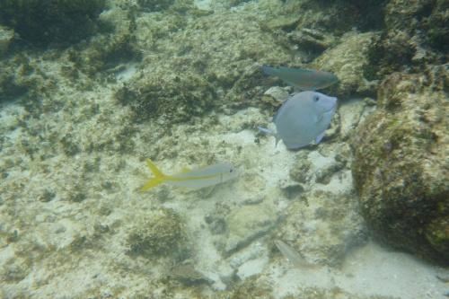 Isla Roatan Reef & Island013