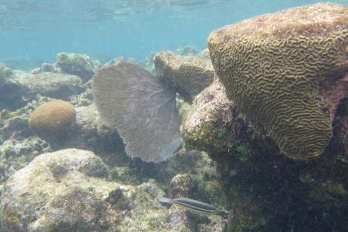Isla Roatan Reef & Island014