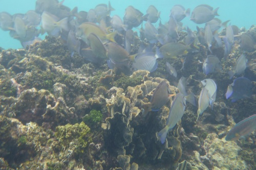 Isla Roatan Reef & Island017