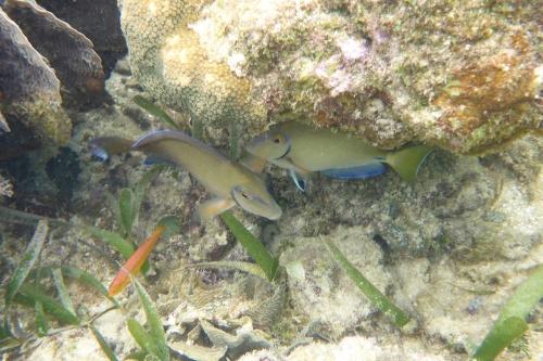 Isla Roatan Reef & Island019