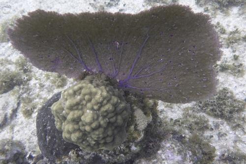 Isla Roatan Reef & Island022