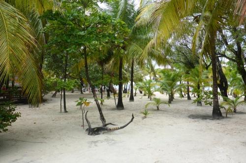 Isla Roatan Reef & Island026
